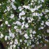 小さな花々