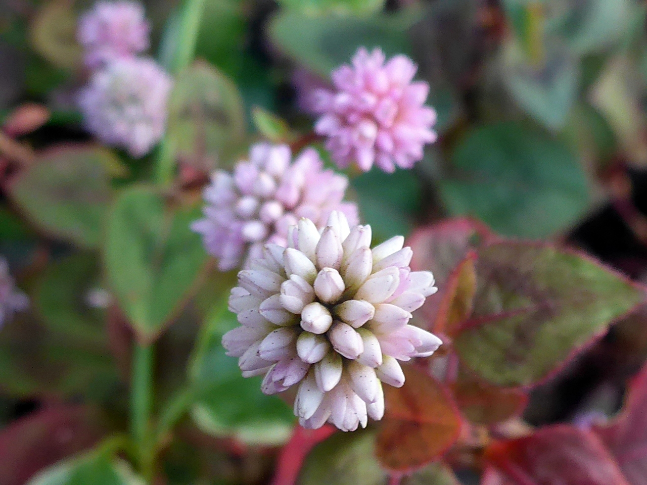 響橋付近の花