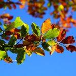 fall-faliage