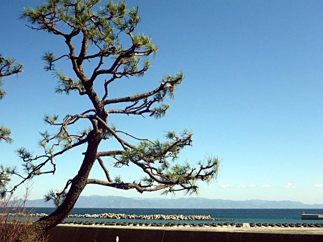 興津駅付近からの海