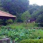 馬場花木園